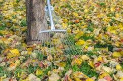 Garden rake Stock Images