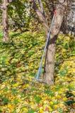 Garden rake Stock Photography