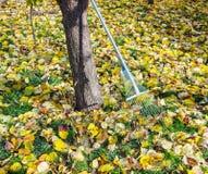 Garden rake Royalty Free Stock Image