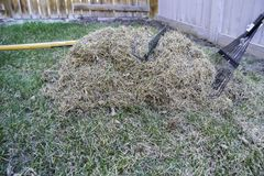Garden rake and pile of dead grass from lawn after winter stock photo