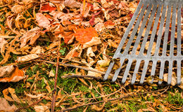 Garden Rake Royalty Free Stock Photos