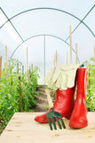 Garden rake and red rubber boots in a hothouse Stock Images