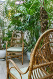 Garden rattan. With chairs and various plants Stock Photo