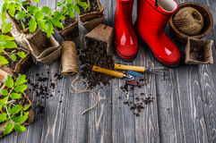 Garden red boot with seedlings tomato ground Royalty Free Stock Photo