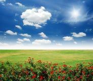 Garden red flower. Lawn blue sky daylight green grass stock photography