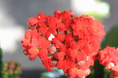 Garden with red flowers. Botanic garden with plants and flowers Stock Photos