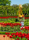 Garden of red tulips Stock Image