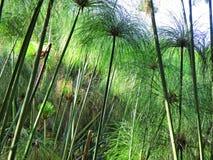 Garden reed-like plants in sunset light Stock Image