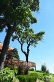 Garden of a restaurant at San Salvador vulcano mountain. View of the balcony of a restaurant at San Salvador vulcano mountain. Grass, trees, plants and hills stock photos