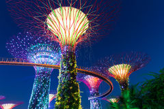 Garden Rhapsody Light Show at Super Tree Grove, Singapore Royalty Free Stock Photography