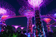 Garden Rhapsody Light Show at Super Tree Grove, Singapore Stock Images