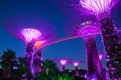 Garden Rhapsody Light Show at Super Tree Grove, Singapore Stock Photo