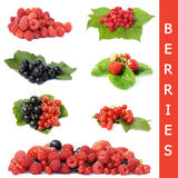 Garden ripe berries collage Royalty Free Stock Image