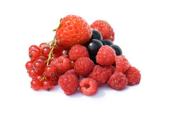 Garden ripe berries isolated over white Stock Images