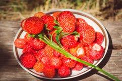 Garden ripe strawberry, close-up royalty free stock photos