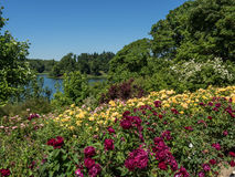 Garden and river Royalty Free Stock Image