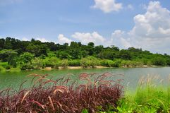 A Garden by the river in Punggol Royalty Free Stock Photos