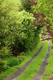 Garden road. A road through a garden in springtime in vertical view Royalty Free Stock Photos