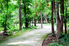 Garden and road in the park. Natural land Royalty Free Stock Photo
