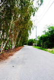 Garden and road in the park. Walking way Royalty Free Stock Photography