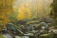 Garden of  rocks. Autumn park scene with garden of mossy rocks Royalty Free Stock Images