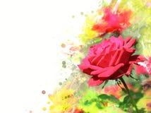 garden rose Stock Image