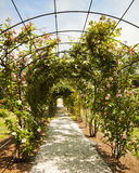 Garden with rose arch. Beautiful arch of rambling roses in a public park in Nervi Royalty Free Stock Photography