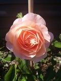 Garden royalty free stock photos