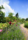 Garden with roses Royalty Free Stock Photography