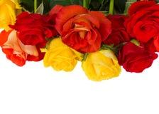 Garden  roses border Stock Photography