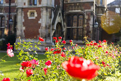 Garden of roses at a college in Cambridge Royalty Free Stock Images