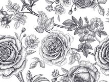 Seamless pattern with rose flowers. Garden roses, flowers, leaves, branches, berries of dog rose. Floral vintage seamless pattern. Black and white background Royalty Free Stock Photos