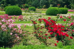 Summer landscape with flowers. Garden with lovely perfumed roses in the park