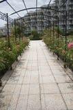 Garden with roses Royalty Free Stock Photos