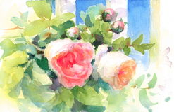 Garden Roses Watercolor Flowers Illustration Hand Painted Stock Photo