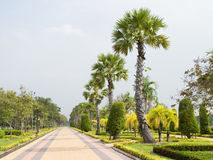 A garden. A row of palms and gardening plants along a walking path in a garden Royalty Free Stock Photo