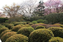 Garden in the Ryoan-ji Temple Royalty Free Stock Images