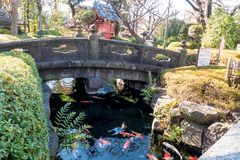 Garden`s bridge over the river with carps stock images