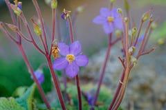 Garden`s flowers Stock Image