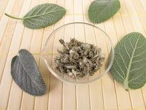 Garden sage, Salviae folium Stock Images