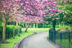 Garden in Saint Stephen`s Green park, Dublin Royalty Free Stock Image