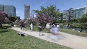 Garden Sakura Tokyo. Tokyo, Japan - April 20, 2017:time lapse of Japanese sakura garden in Hamarikyu Gardens, Shiodome buildings and people on benches. Spring stock video
