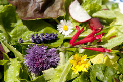 Garden salad with eatable flowers Stock Image