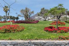 Garden with salvia at Funchal, Madeira Island, Portugal Royalty Free Stock Photos