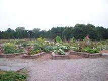 Garden with Scarecrow. Scarecrow in the green garden Stock Photography