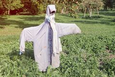 Garden scarecrow made of old clothing standing in the field at summer royalty free stock images