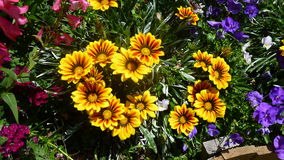 Free Garden Scene Royalty Free Stock Images - 56829159