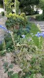 Tranquil French country Garden scene. With blue flowers, green vegetation and stone steps Stock Photo