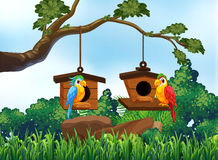 Garden scene with two parrots Stock Image