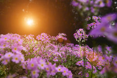 Garden scenery at sunrise. Blossom garden scenery at sunrise or sunset Stock Photo